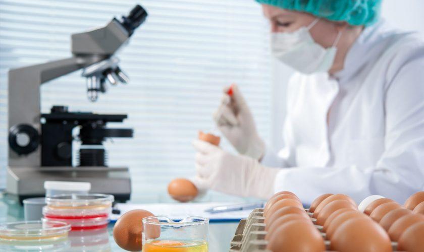 chicken-eggs-in-lab